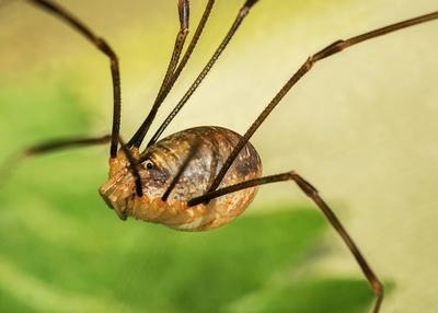 """""""Schwebende"""" Spinne"""