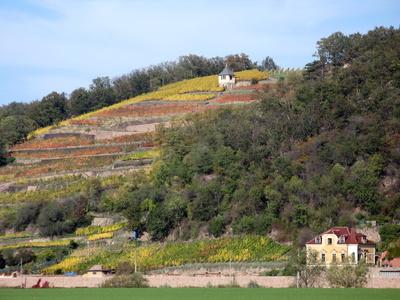 Weinberge an der Elbe in der sächischen Schweiz