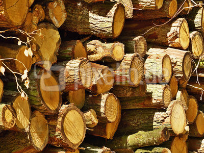 Holzstapel am Waldrand