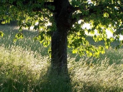 Baum und Gräser im Gegenlicht