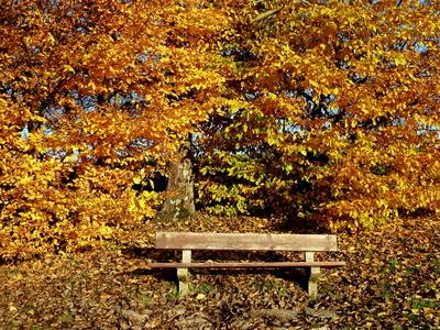 Sitzbank umrahmt mit Herbstfarben