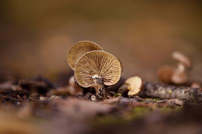 Herbst ist Pilzzeit