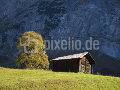 Herbstbaum an der Grossen Scheidegg