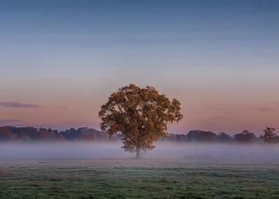 Der Baum und der Nebel