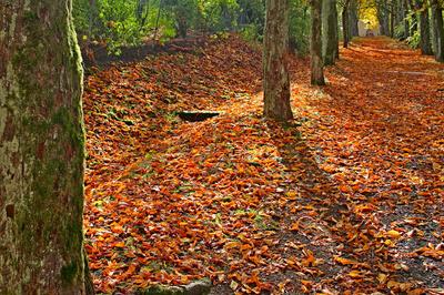 Herbstzeit - Auszeit