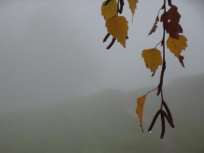 Herbstlaub mit Nebeltropfen