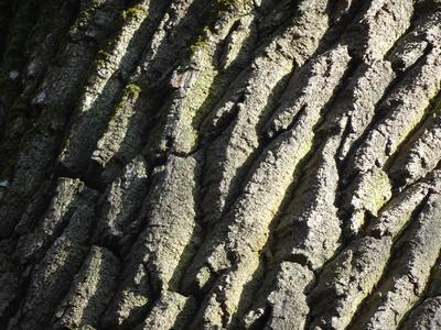 Baumrindenstruktur