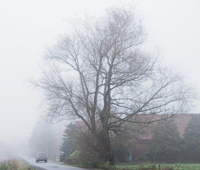 durch den nebel, auf dem weg zur arbeit