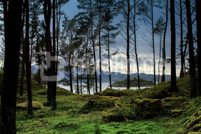 Geheimnisvoller Wald in Norwegen
