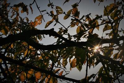 Blattwerk im Herbst