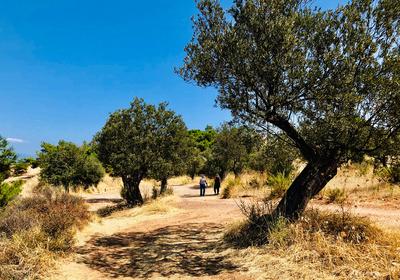 Spaziergang im Olivenhain