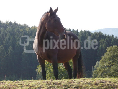 Klasse   Pferd