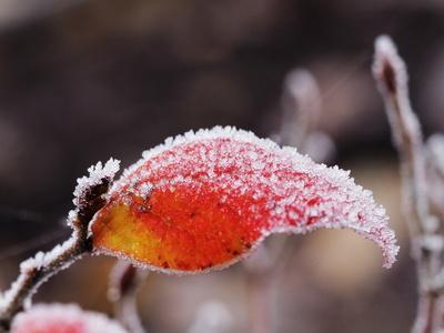 gefroren hat es heuer 4