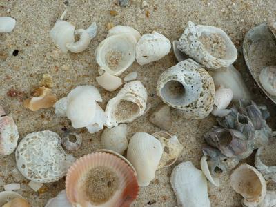 Verschiedene Muscheln an einem Strand in Thailand