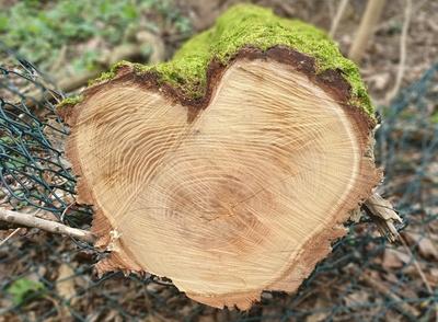Ein Herz aus Holz