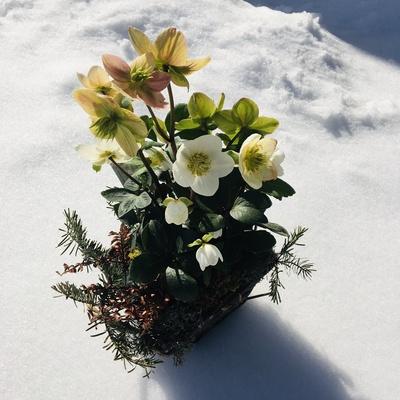 Spielerei im Schnee