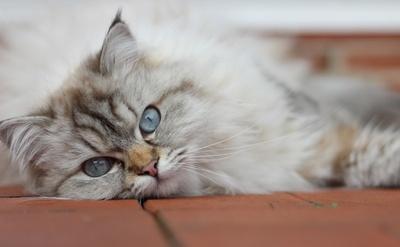 Katze - Mia