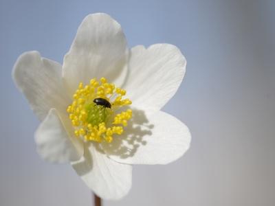 Der Frühling ist zurück