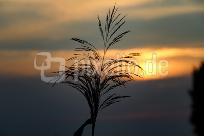 Sonnenuntergang mit Pflanze