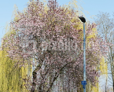 frühlingsblüte am wegesrand