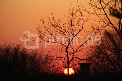 Coro-Sonnenuntergang zuhause