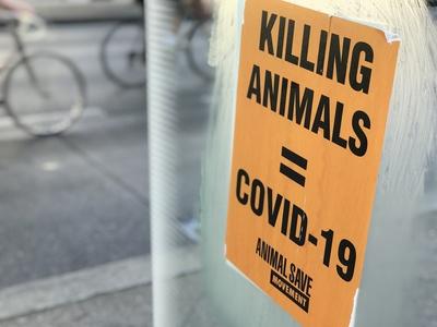 "Protest für Tierschutz: ""Killing Animals = Covid-19"" / Foto: Alexander Hauk"