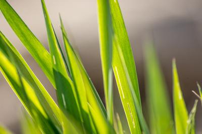 Grüne Ruhe