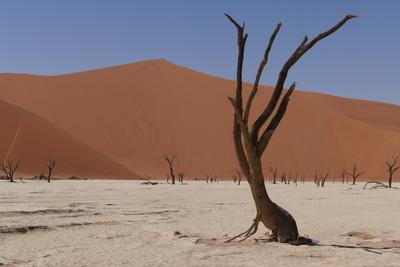 In der Namibwüste