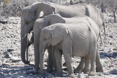 Elefantenfamilie im Etosha Nationalpark