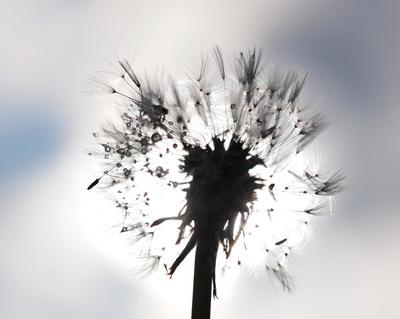 in sonne und wind
