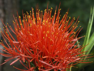 Exotische Blüte in Farbe