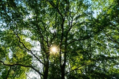 Baumkrone im Sonnenlicht