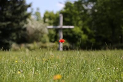 Mohnblume vor einem Kreuz