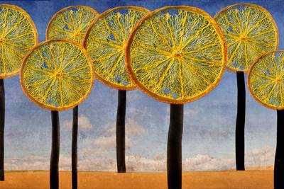 Citrus-Bäumchen.....