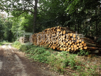 Holzstapel am Waldweg