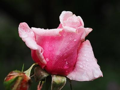 rosa - rot
