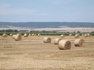 Strohballen - Rundballen auf dem Feld