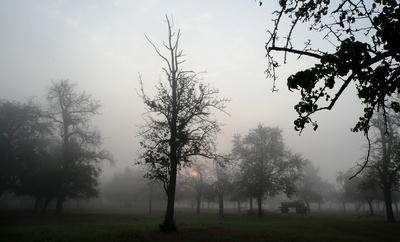 Augustmorgen nach einer Regennacht