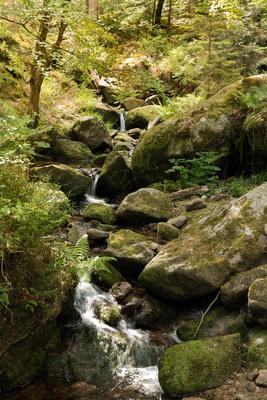 Wandertag im Schwarzwald