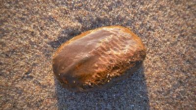 Versteinerte Fossilie