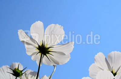 Sommerblüten 02