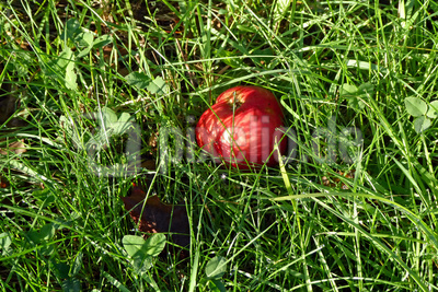 Apfel im Gras