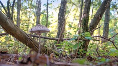 Pilzfund im Unterholz