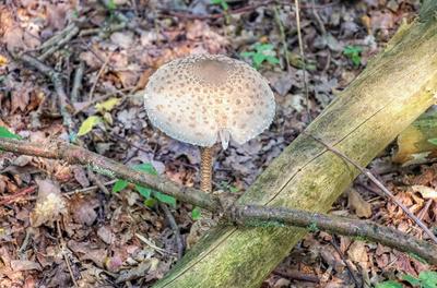 Pilzfund im Eichenwald