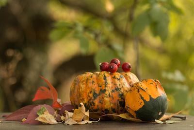 Herbstzeit....Kürbiszeit...