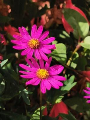 Blüten in pink