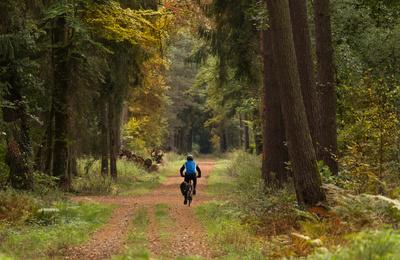 durch den Herbstwald radeln