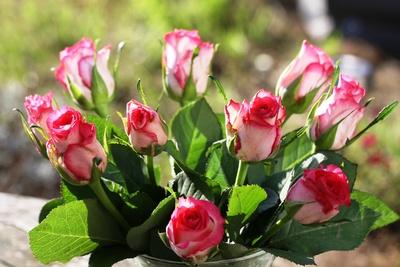 Rosen in der Mittagssonne
