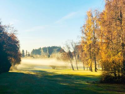 Goldener Novembermorgen