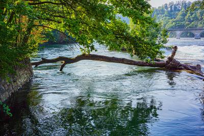 Rhein vor dem Fall